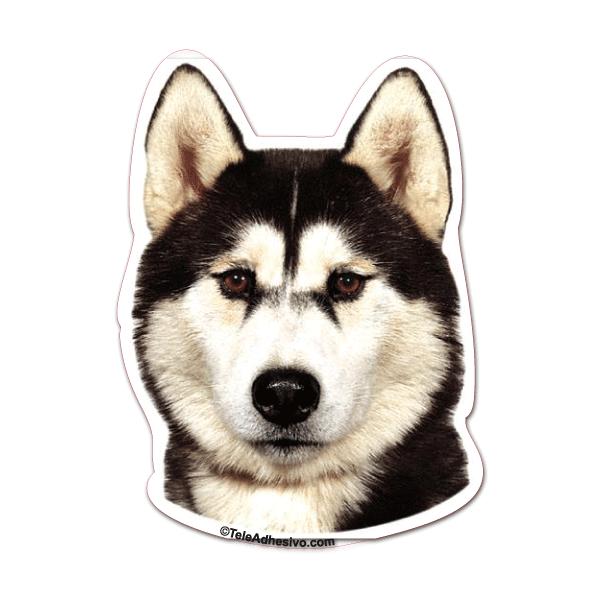 Pegatinas razas de perros Husky Siberiano